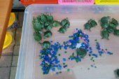 Карликовые черепашки — на самом деле красноухие черепахи