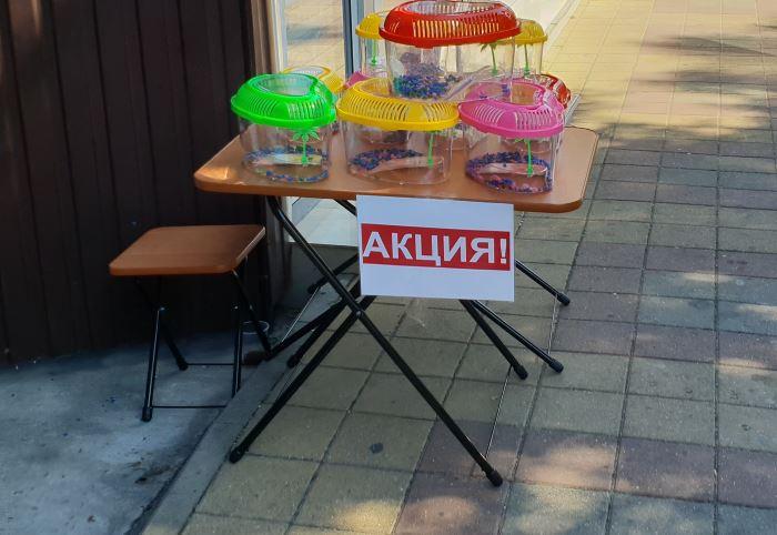 Продажа черепашек в Сочи