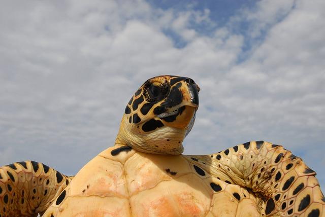 Как перевозить черепаху в транспорте